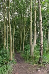 Brook Wood Path