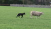 First of many lambs