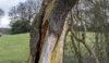 It's bad but it's not a birch