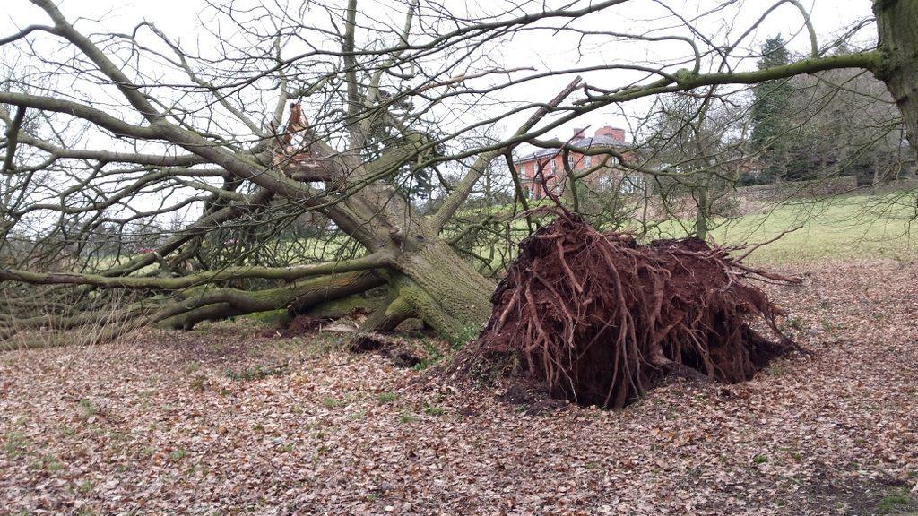 Shame! Oak is a proper tree