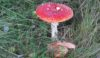 Noddy likes toadstools like this