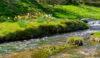 A fast flowing stream