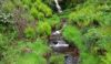 One of the waterfalls by the path along the Dunsop