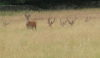 Red deer - this is what you missed on the walk