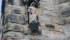 The Winwick pig on the church it had a snout in