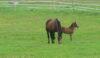A baby horse. Aaah!