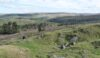 Gazing over the Goyt Forest